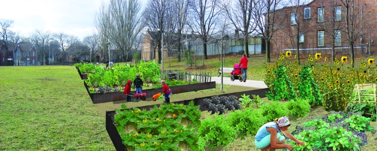 Allotment Gardens for Local Food