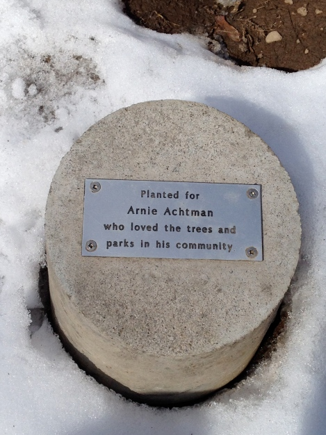 Dedication marker at the base of Arnie's Maple tree.