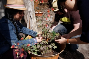 Laneway Greening Workshop: Ping and Aidan get their hands dirty.  Photograph: Tiffany Chiang